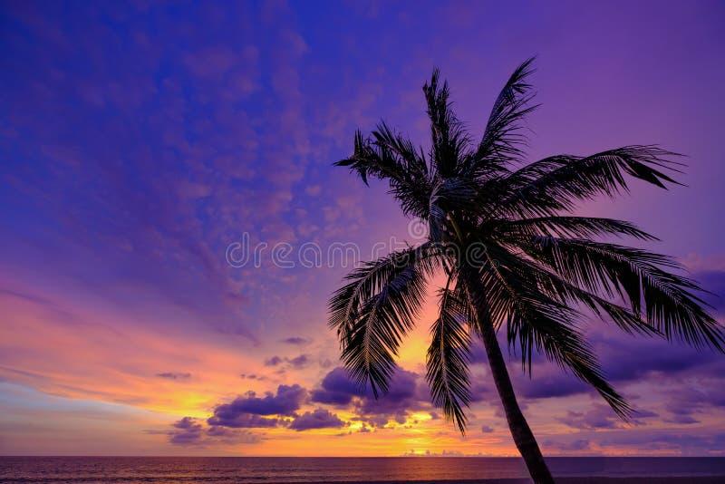 Paisaje con colores azul-anaranjados de la puesta del sol colorida del cielo con la palmera del coco de la silueta en fondo foto de archivo libre de regalías