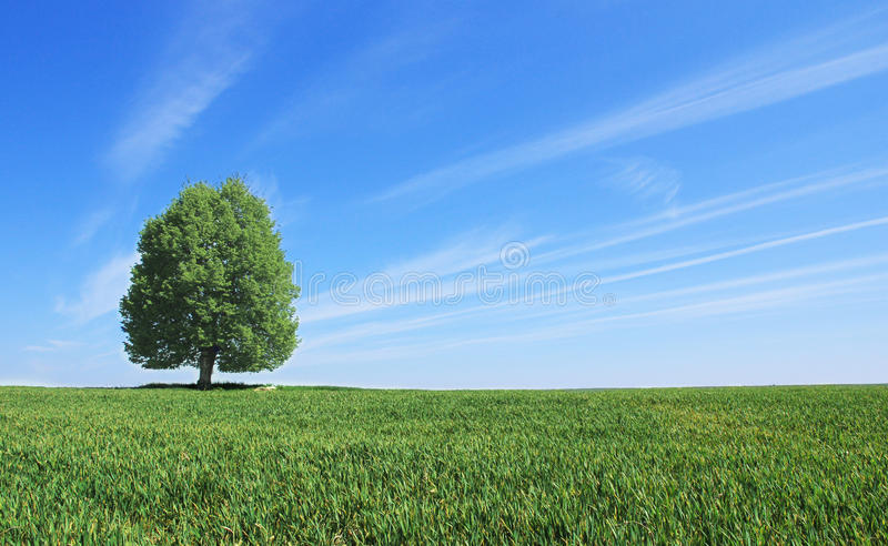 Paisaje con el árbol fotografía de archivo
