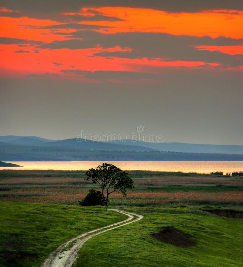 Paisaje con el árbol en la puesta del sol fotos de archivo libres de regalías