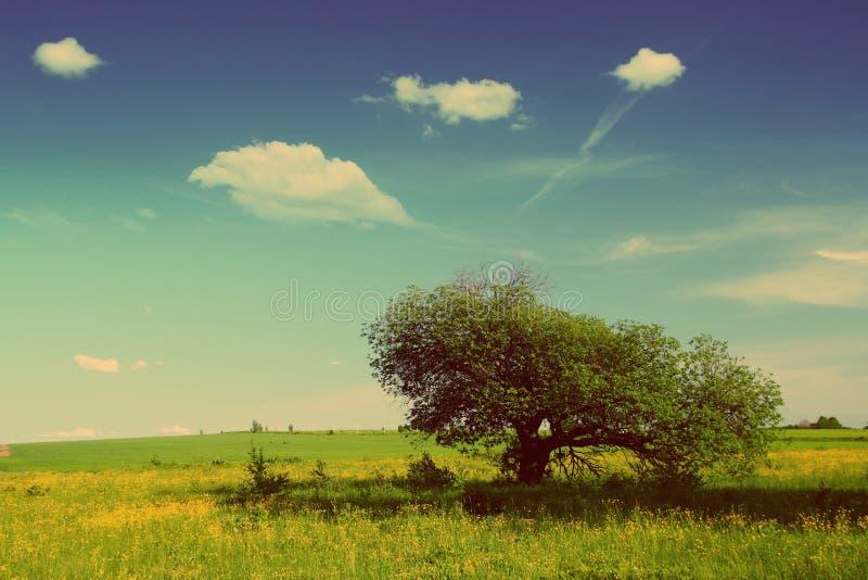 Paisaje con el árbol - estilo retro del verano del vintage fotografía de archivo libre de regalías