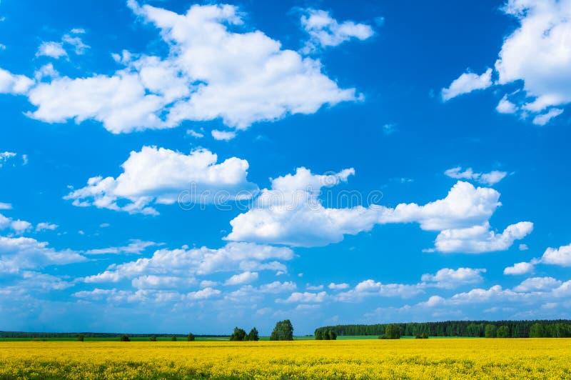 Paisaje y cielo de la pradera foto de archivo