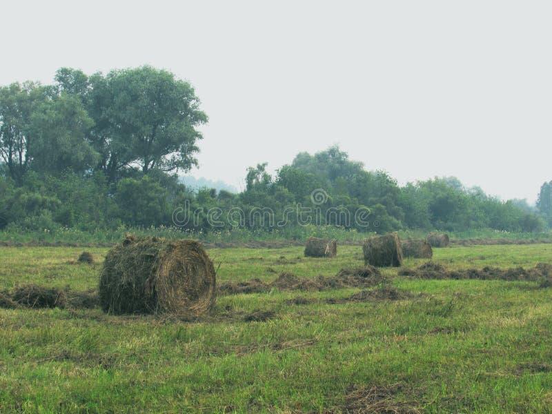Paisaje con el prado verde, el bosque en la distancia y los pajares torcidos del heno marrón seco en un día de niebla imágenes de archivo libres de regalías