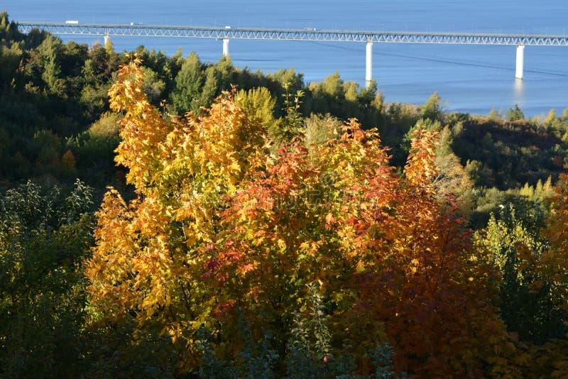 Paisaje con el puente sobre el río Volga y los árboles de arce con follaje colorido en el primero plano D?a asoleado del oto?o imagen de archivo