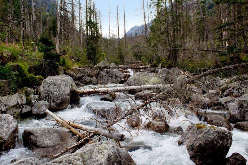 Paisaje con el río de la montaña foto de archivo libre de regalías
