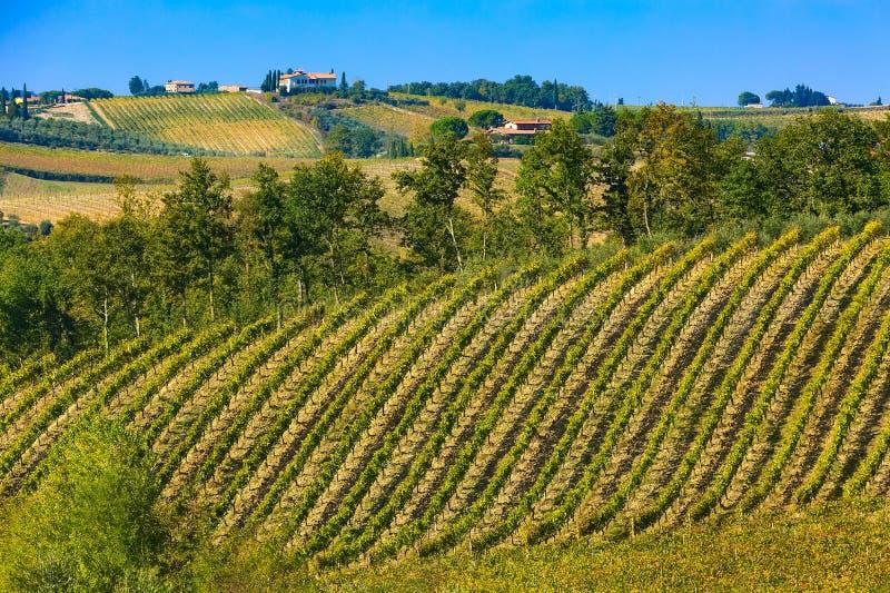Paisaje con filas de los viñedos, Italia de Toscana imágenes de archivo libres de regalías