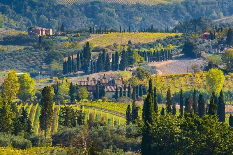 Paisaje con filas de los viñedos, Italia de Toscana foto de archivo libre de regalías