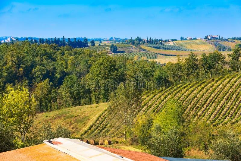 Paisaje con filas de los viñedos, Italia de Toscana imagen de archivo