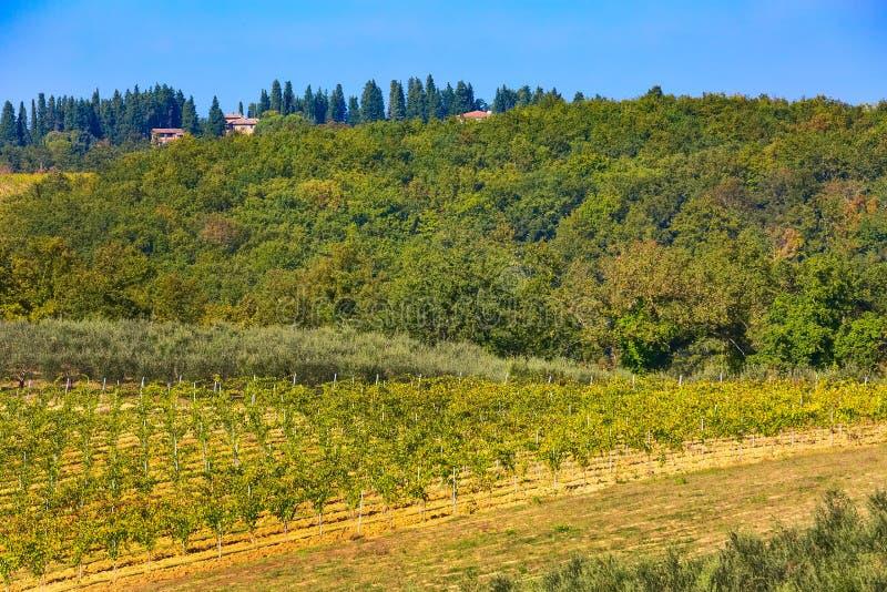 Paisaje con filas de los vi?edos, Italia de Toscana imagenes de archivo