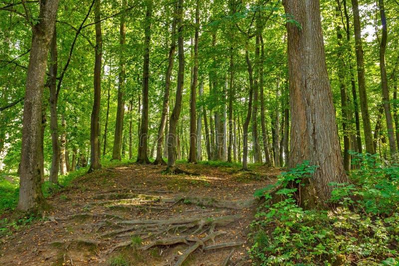 Paisaje con la bifurcación rural de los caminos en bosque imagen de archivo
