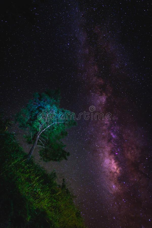 Paisaje con la galaxia de la vía láctea sobre árbol Cielo nocturno con las estrellas foto de archivo libre de regalías