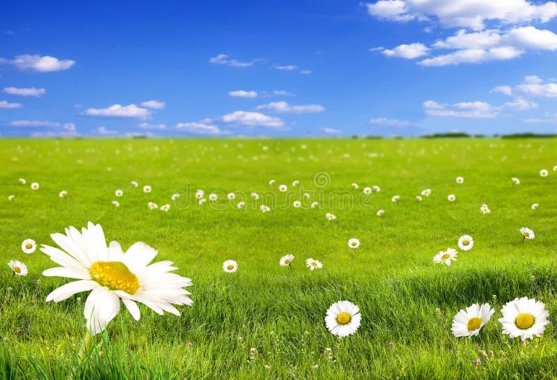 Paisaje con las flores foto de archivo libre de regalías