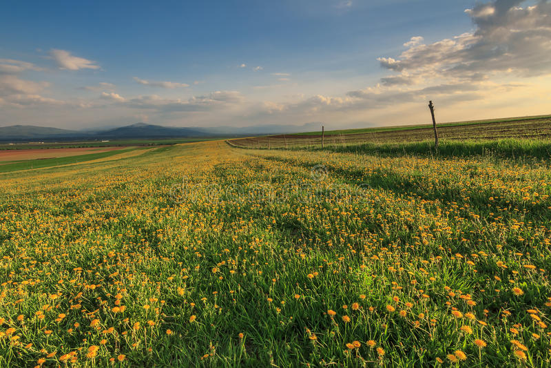 Paisaje Con Las Flores Amarillas Y Puesta Del Sol Foto De