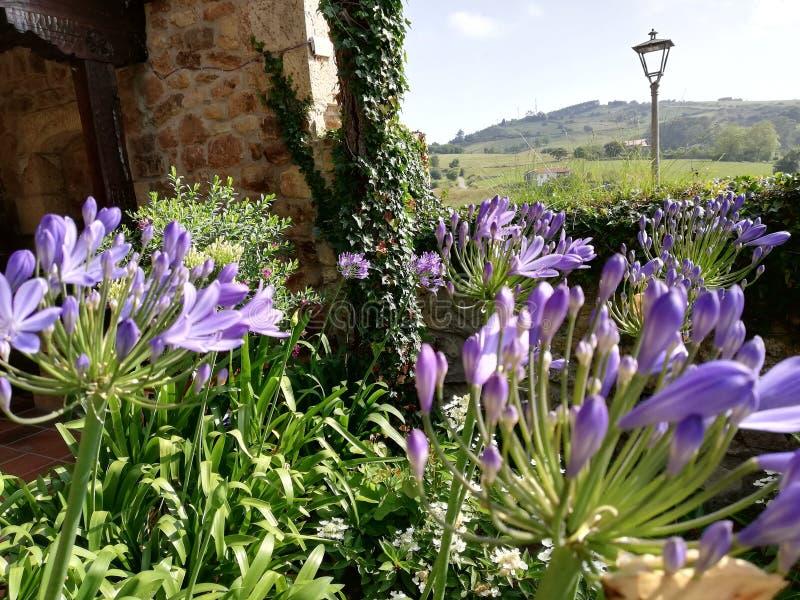 Paisaje con las flores foto de archivo
