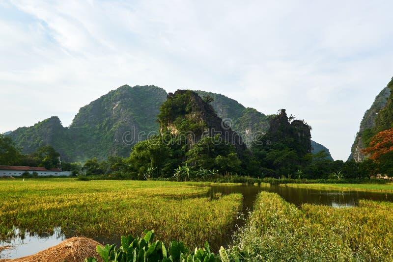 Paisaje con las montañas y campo del arroz en Tam Coc Vietnam foto de archivo