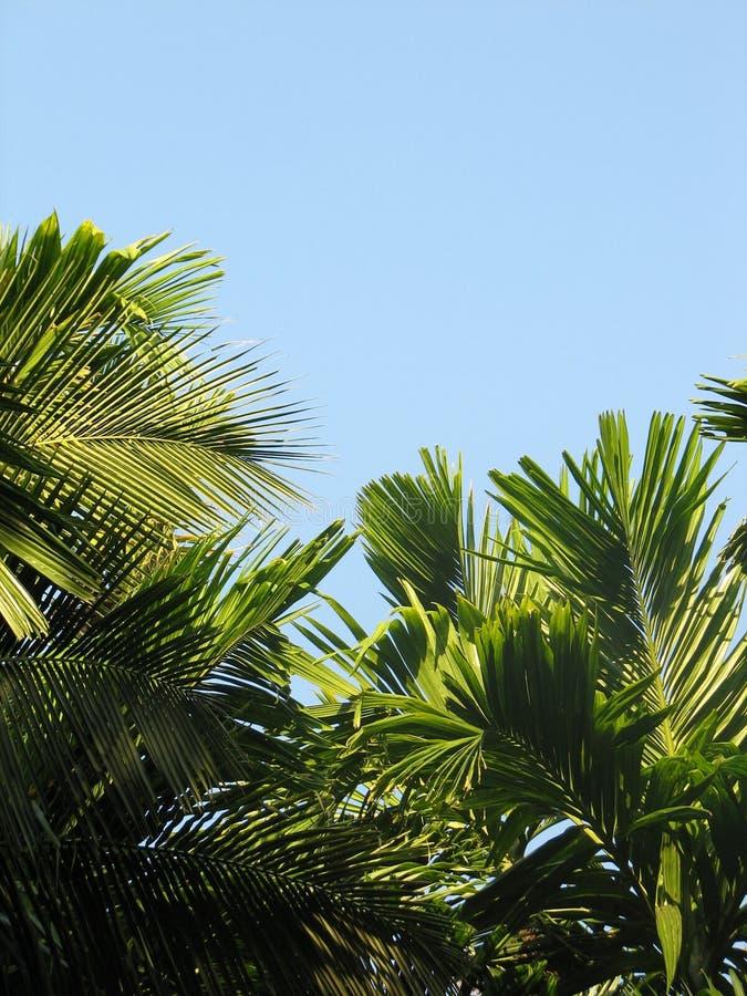 Paisaje con las palmeras del bosque subtropical fotos de archivo