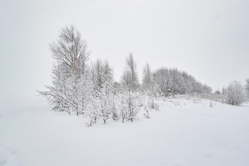 Paisaje con los árboles del contraste en el contexto de la nieve imagen de archivo