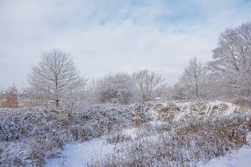 Paisaje con los árboles desnudos y los arbustos del invierno cubiertos en nieve en el campo flamenco foto de archivo libre de regalías