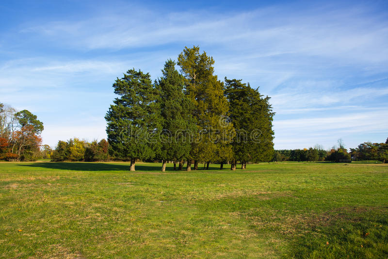 Paisaje con los árboles y la hierba fotografía de archivo