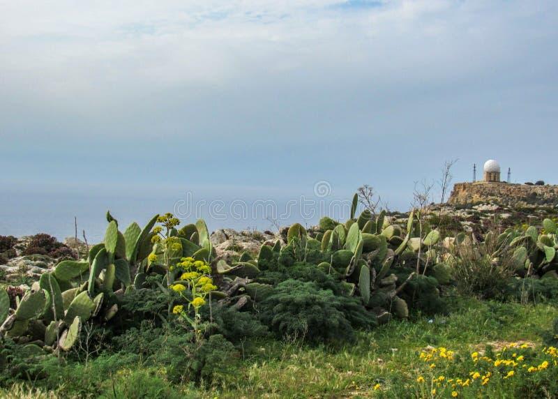 Paisaje con los acantilados de Dingli y las vistas majestuosas del mar Mediterráneo y del campo enorme, Malta imagen de archivo libre de regalías