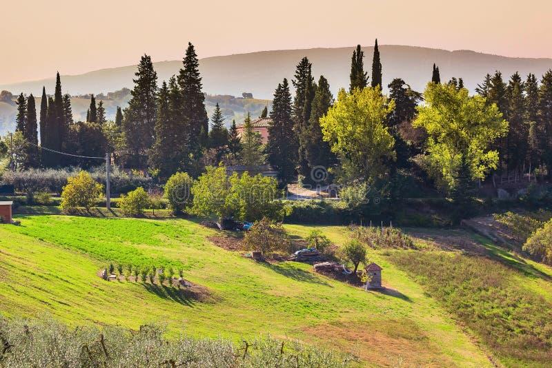 Paisaje con los viñedos, Italia de Toscana foto de archivo libre de regalías