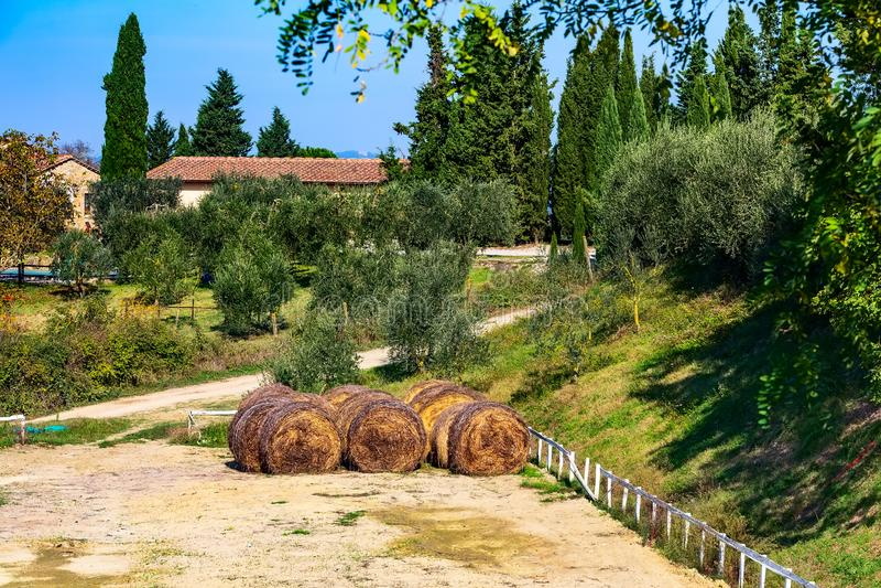 Paisaje con los viñedos, Italia de Toscana fotos de archivo