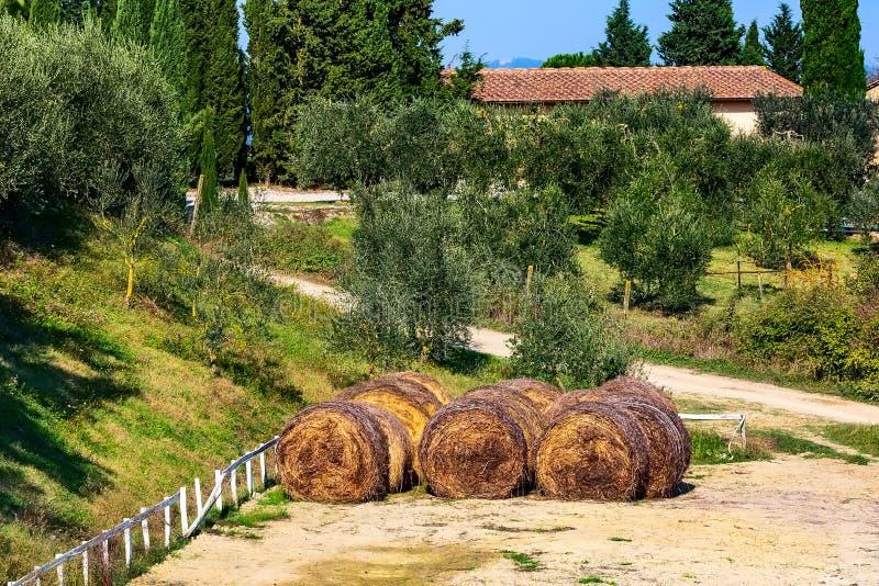 Paisaje con los viñedos, Italia de Toscana imagenes de archivo