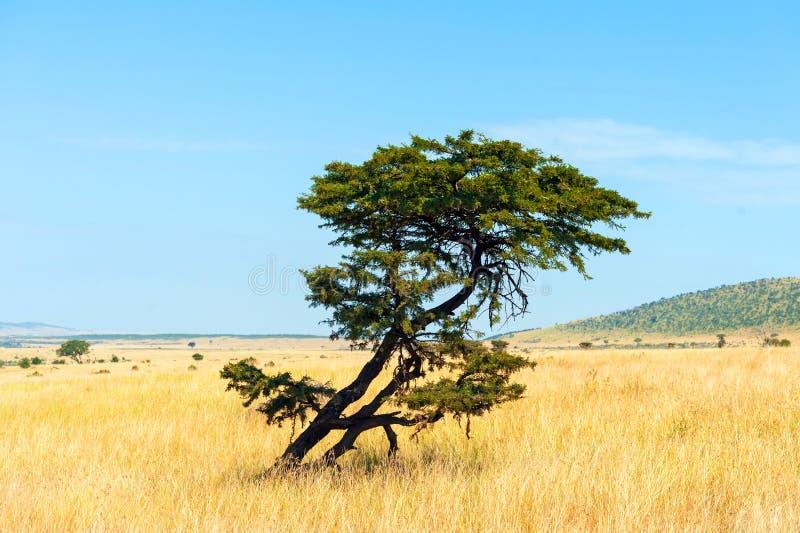 Paisaje con nadie árbol en África fotografía de archivo