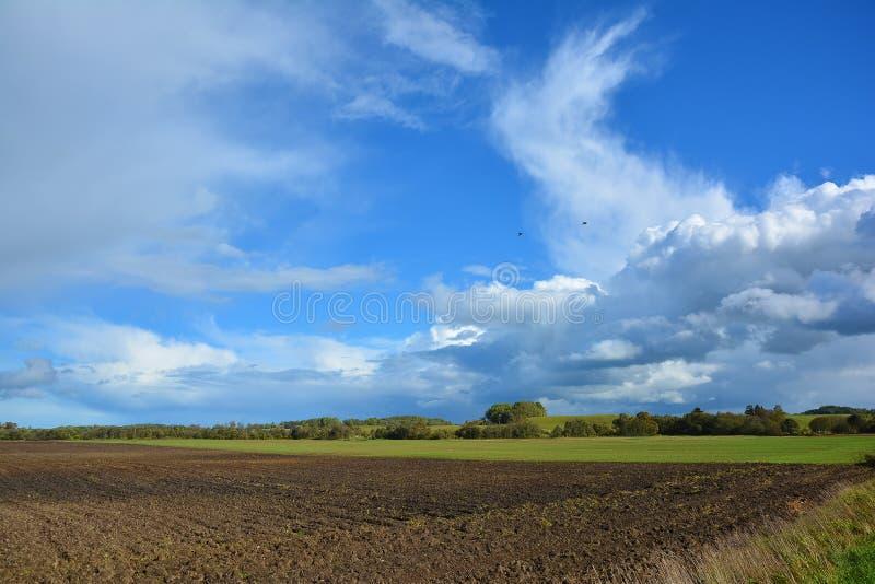 Paisaje con vista de no urbano, del campo, del campo verde, de árboles y del cielo azul con las nubes blancas Paisaje del otoño e fotos de archivo