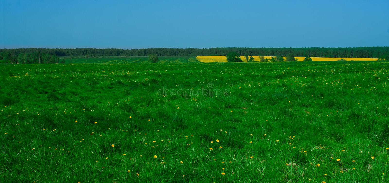Paisaje con vistas del campo amarillo fotografía de archivo