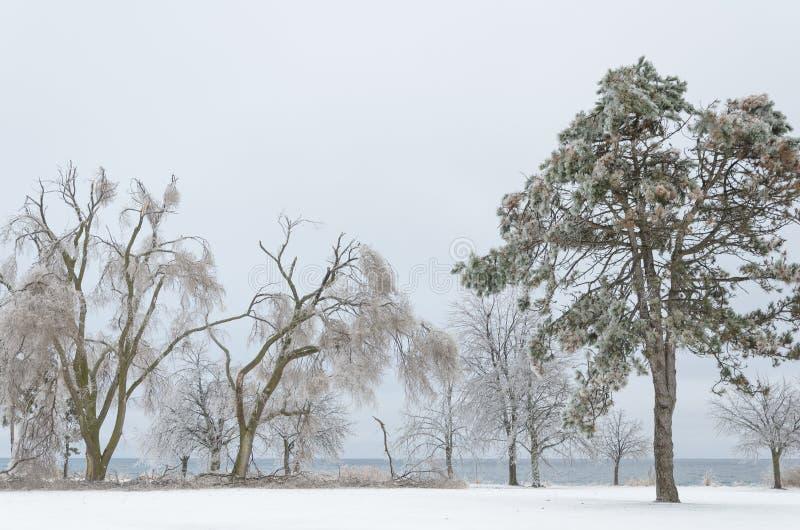 Paisaje congelado del invierno imagenes de archivo