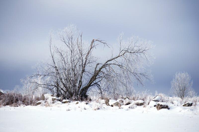Paisaje congelado frío del invierno del árbol seco foto de archivo