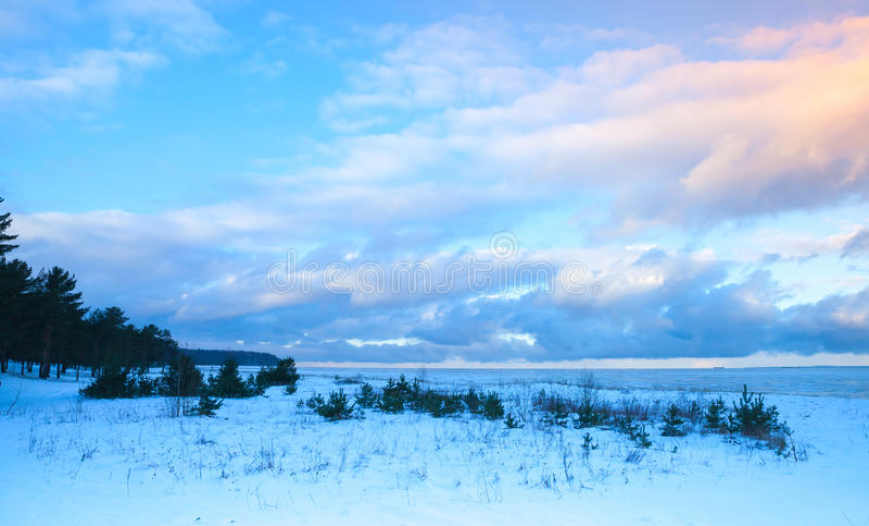 Paisaje costero del invierno con los pequeños árboles imagen de archivo libre de regalías