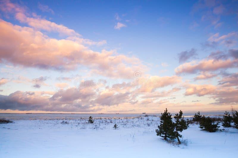 Paisaje costero del invierno con los pequeños árboles de pino fotos de archivo
