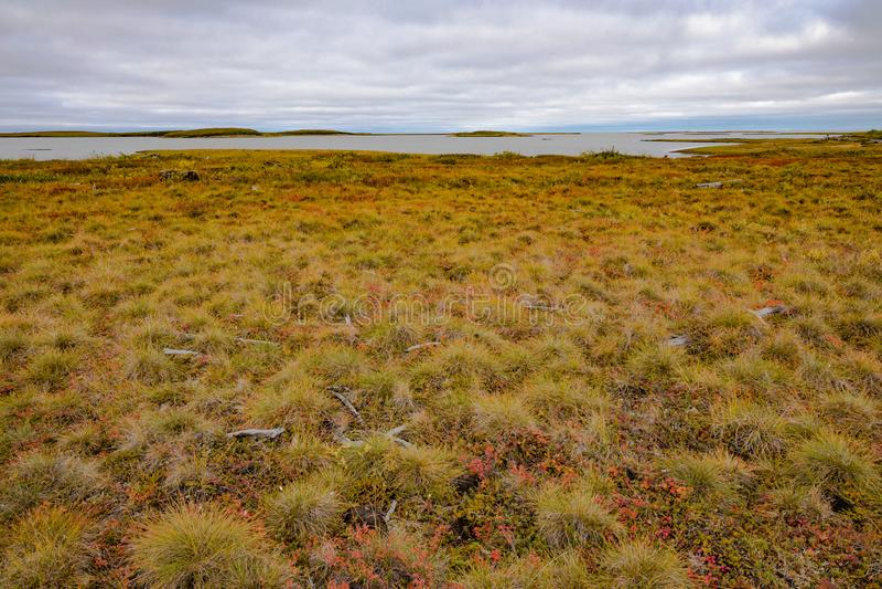 Paisaje costero del tundra ártico NWT Canadá imagen de archivo libre de regalías