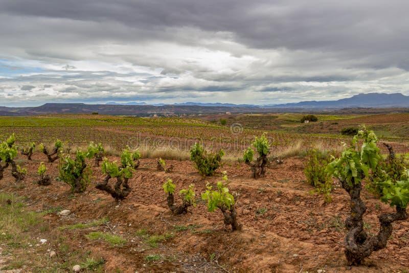 Paisaje cubierto escénico con los viñedos en La Rioja, España, ruta Ventosa-Najera foto de archivo libre de regalías