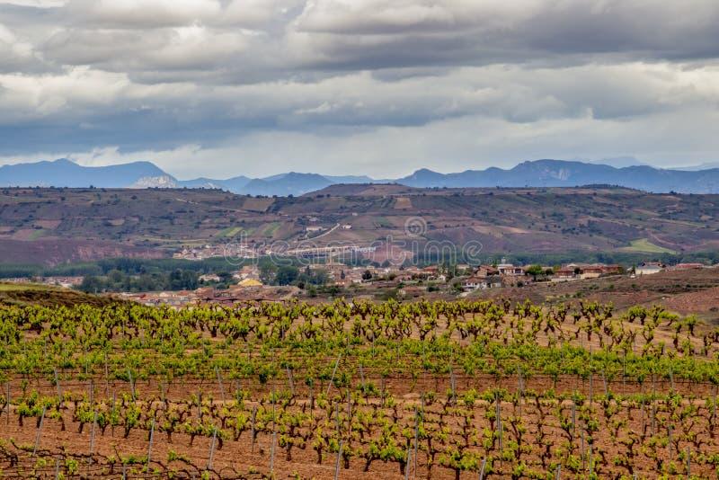 Paisaje cubierto escénico con los viñedos en La Rioja, España, ruta Ventosa-Najera fotos de archivo libres de regalías