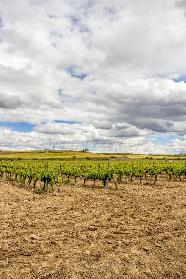 Paisaje cubierto escénico con los viñedos en Navarra, España cerca de Viana foto de archivo