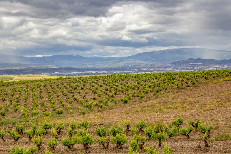 Paisaje cubierto escénico con los viñedos en Navarra, España, del Río-Viana de Torres de la ruta fotos de archivo libres de regalías