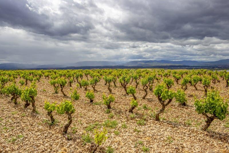 Paisaje cubierto escénico con los viñedos en Navarra, España, del Río-Viana de Torres de la ruta fotografía de archivo libre de regalías