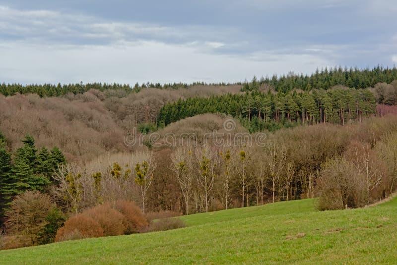 Paisaje de Ardenas con el lado de la colina del balanceo con los pinos y los árboles de hojas caducas fotos de archivo