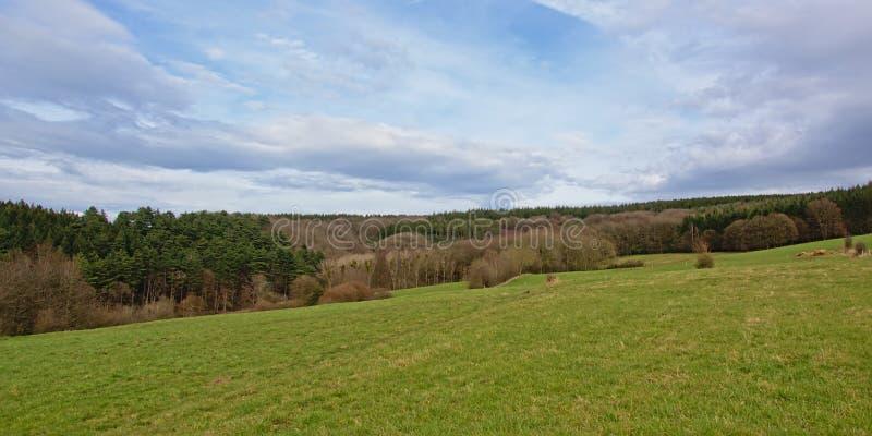 Paisaje de Ardenas con los lados de Rolling Hills con el pino y otros árboles fotografía de archivo