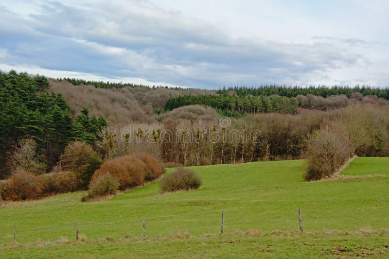 Paisaje de Ardenas, hilsl rodante con los pinos y árboles de hojas caducas debajo de las nubes oscuras imagen de archivo libre de regalías