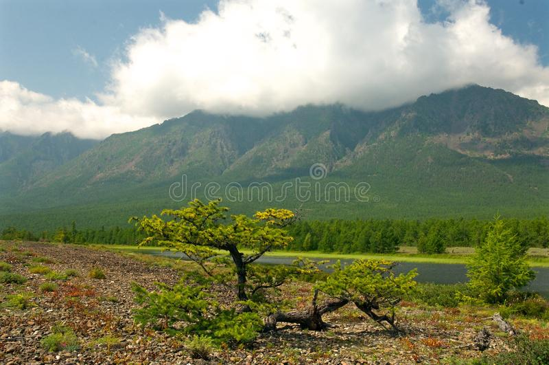 Paisaje de Baikal con el bosque verde de la primavera fotos de archivo