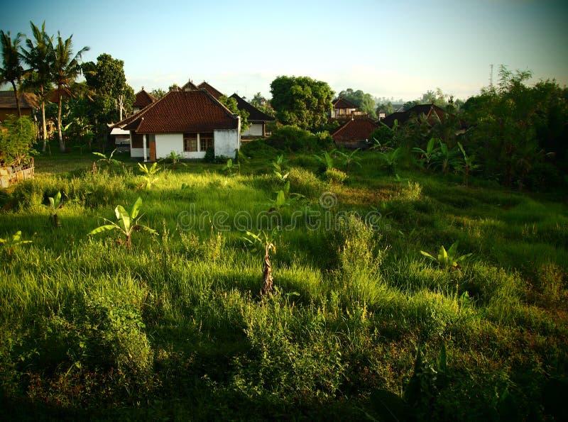 Paisaje de Bali con la plantación de plátano imagen de archivo