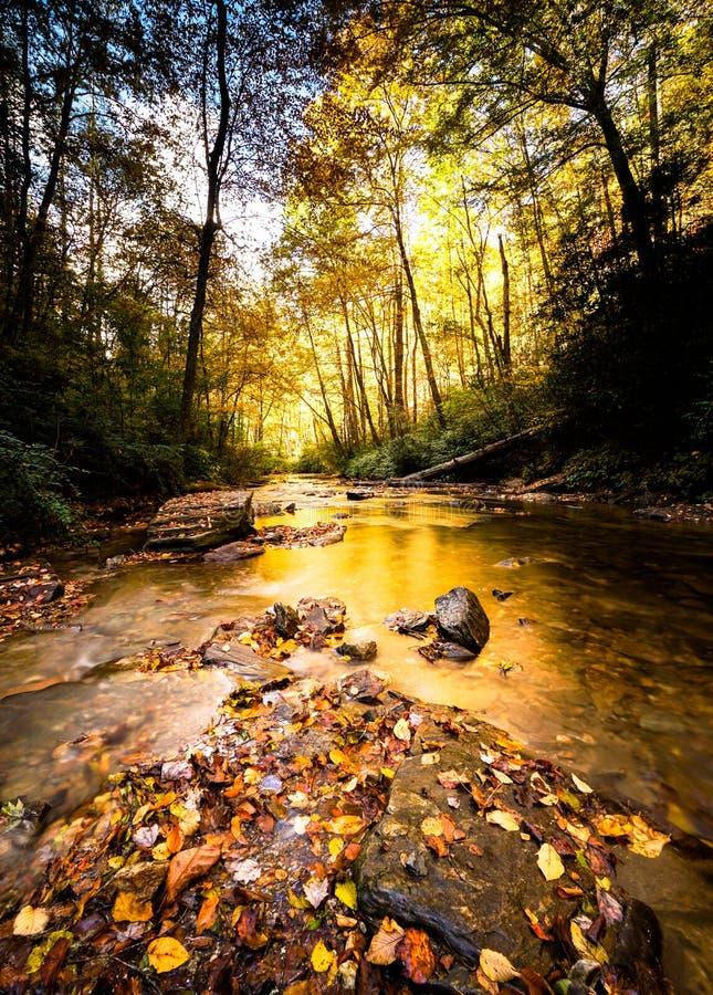 Paisaje de Fall River y del bosque con colores intensos y follaje del otoño fotos de archivo