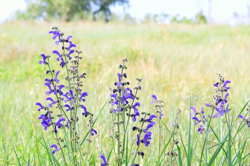 Paisaje de flores fotografía de archivo libre de regalías