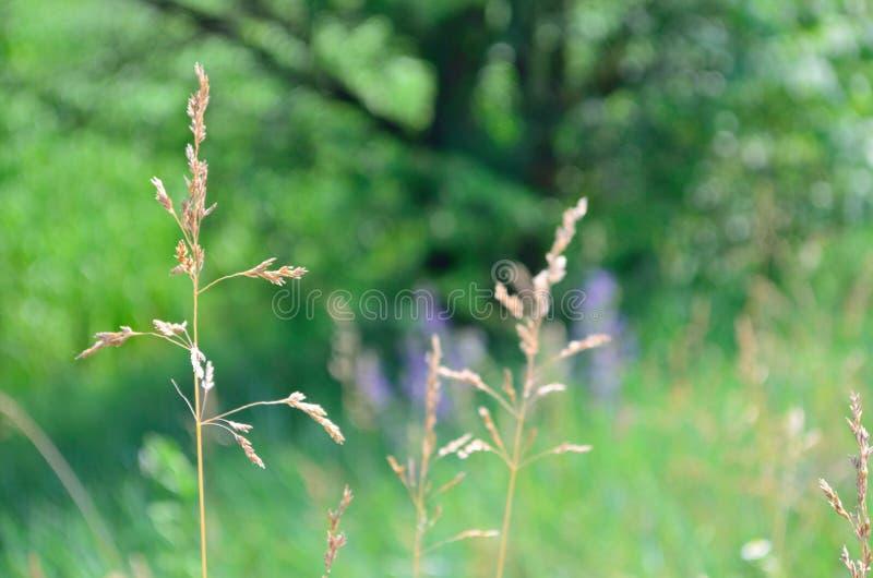 Paisaje de flores fotografía de archivo