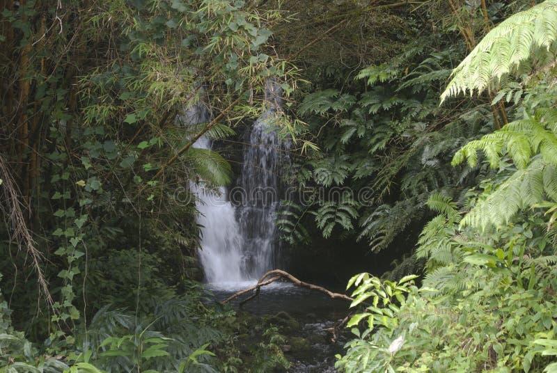 Paisaje de Hawaii: Pequeña cascada cerca de las caídas de Akaka foto de archivo