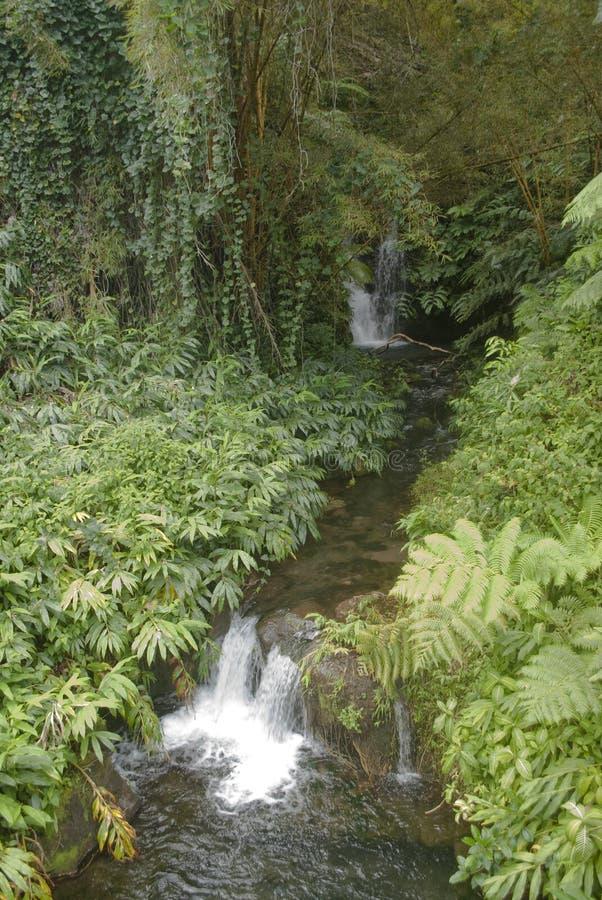 Paisaje de Hawaii: Pequeñas cascadas de la cascada cerca de las caídas de Akaka imagen de archivo