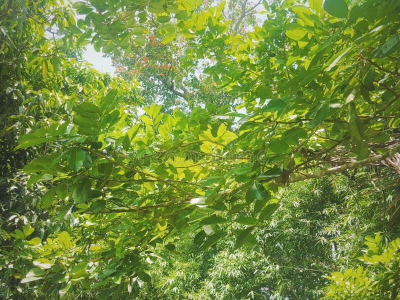 Paisaje de hojas imagenes de archivo